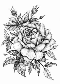 236x332 With Roses, Black And White But Filled In Or Faded Roses On Thigh