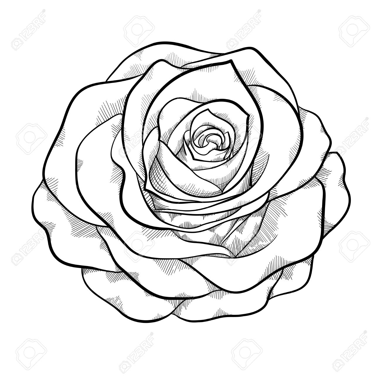 1300x1299 Beautiful Monochrome Black And White Rose Isolated On White