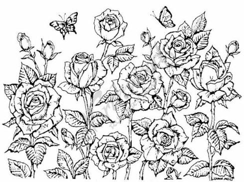 489x365 Drawn Rose Rose Cluster