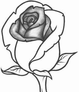 260x302 How To Sketch A Rose