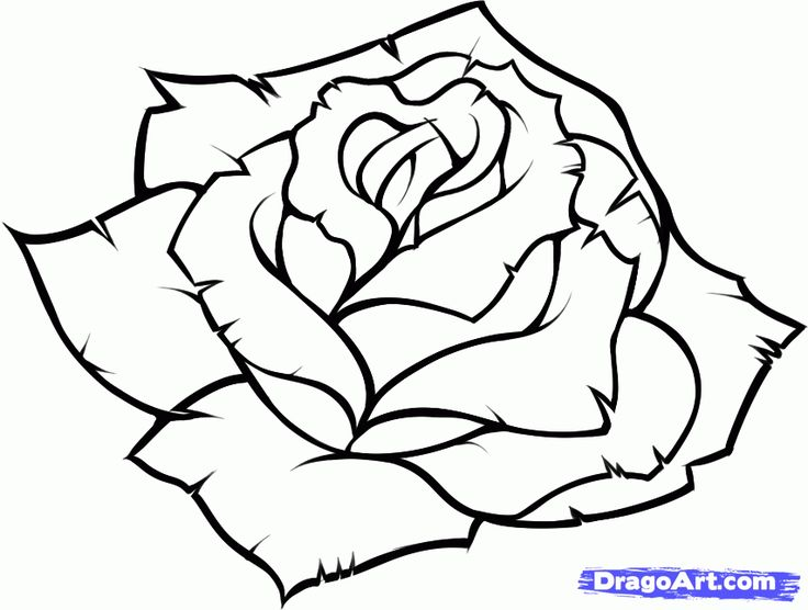 736x556 Photos Black And White Sketches Of Roses Step,