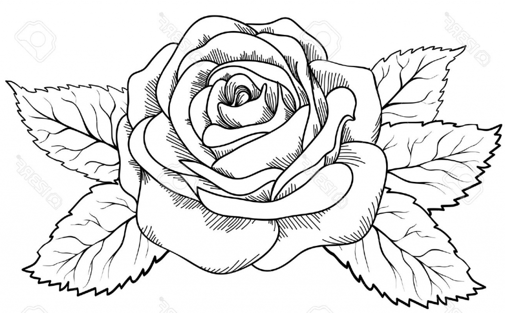 1024x635 Rose Drawing Pictures. Rose Drawings Rose Pen Drawing With Glass