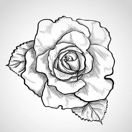 450x450 Sketch Rose Branch Stock Vector Werta.w