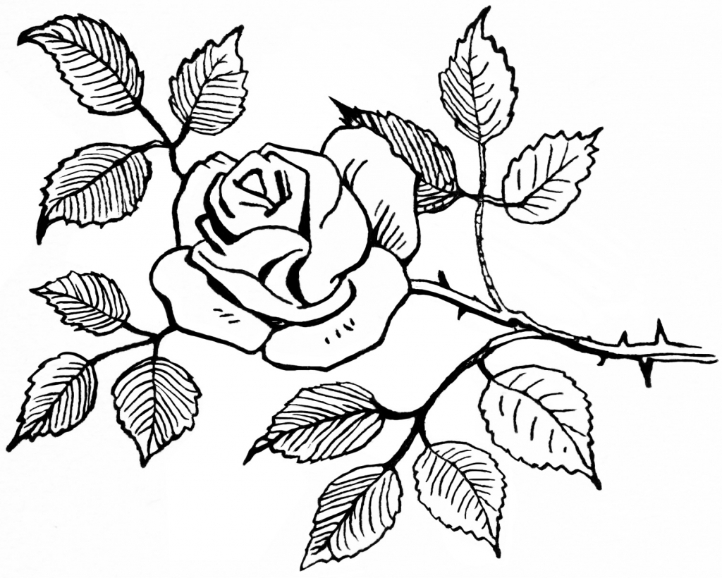 1024x820 Easy Roses Bouquet Drawings Rose Flowers Drawing Easy Rose