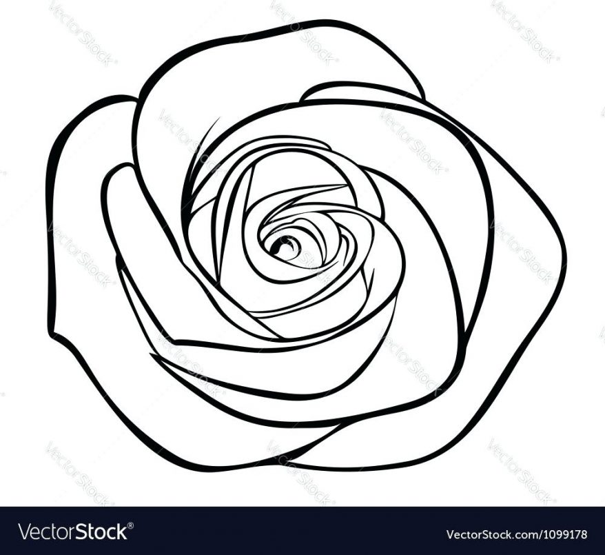 878x805 Flowers Dahlia Bloom Drawings Line Rose Drawing Outline With Stem