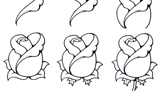 570x320 How Draw A Open Rose Step By For Beginners How