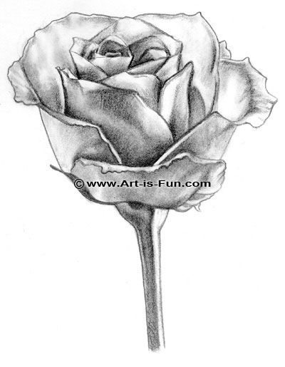 Roses Drawing In Pencil