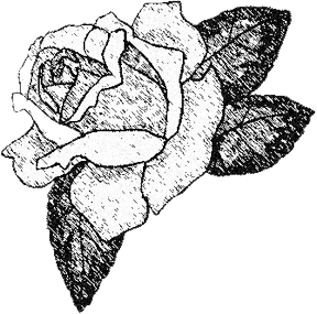 288x285 Drawings Of Roses Made Easy With Your First Sketch