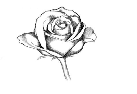 474x328 Love Roses Drawings Step By Step