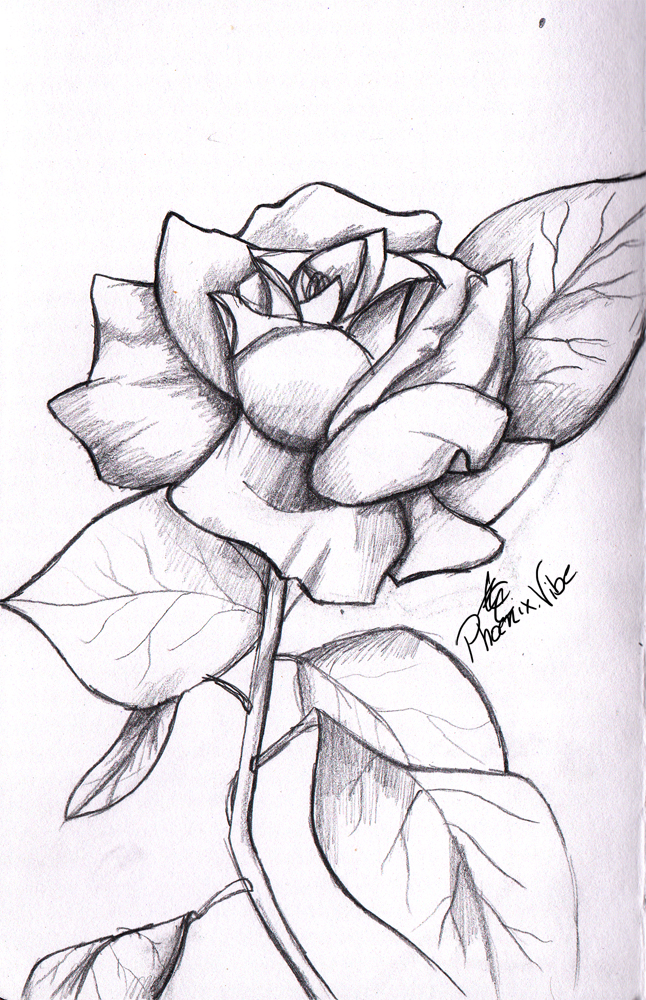 646x1000 Rose Drawings In Pencil Simple Rose From My Sketchbook. Enjoy 3