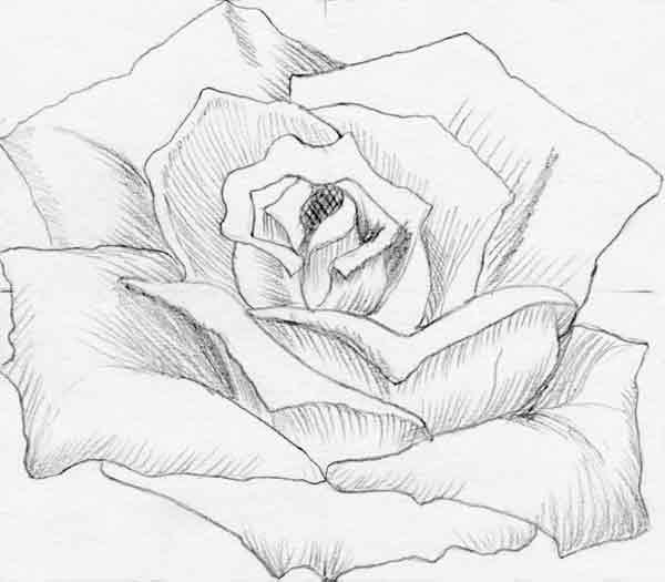 600x525 How To Draw Flowers