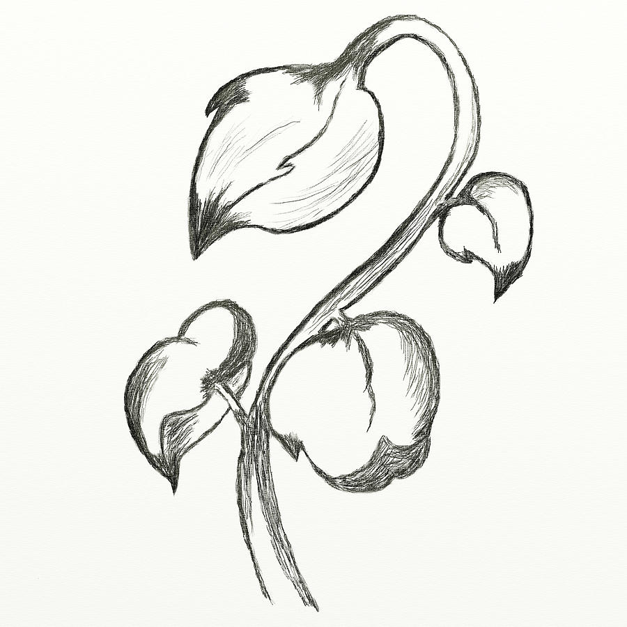 900x900 Easy Pencil Sketches Of Flowers Roses