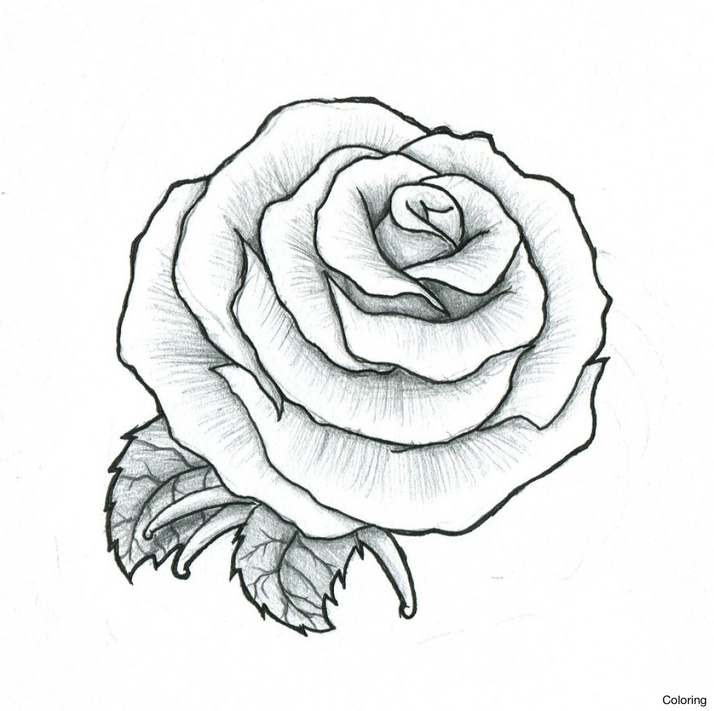 1024x1019 Rose Drawing Picture Tattoo Roses Tatto Stylizr Of Coloring 2f