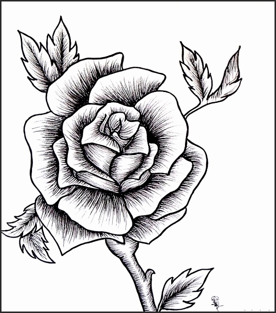561x636 Easy Drawing Of Rose Tnqun Inspirational Easy Drawings Roses Step