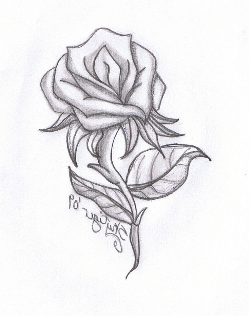 807x1024 Pictures Of Drawing Roses Easy Pencil Drawing Of Rose Drawing