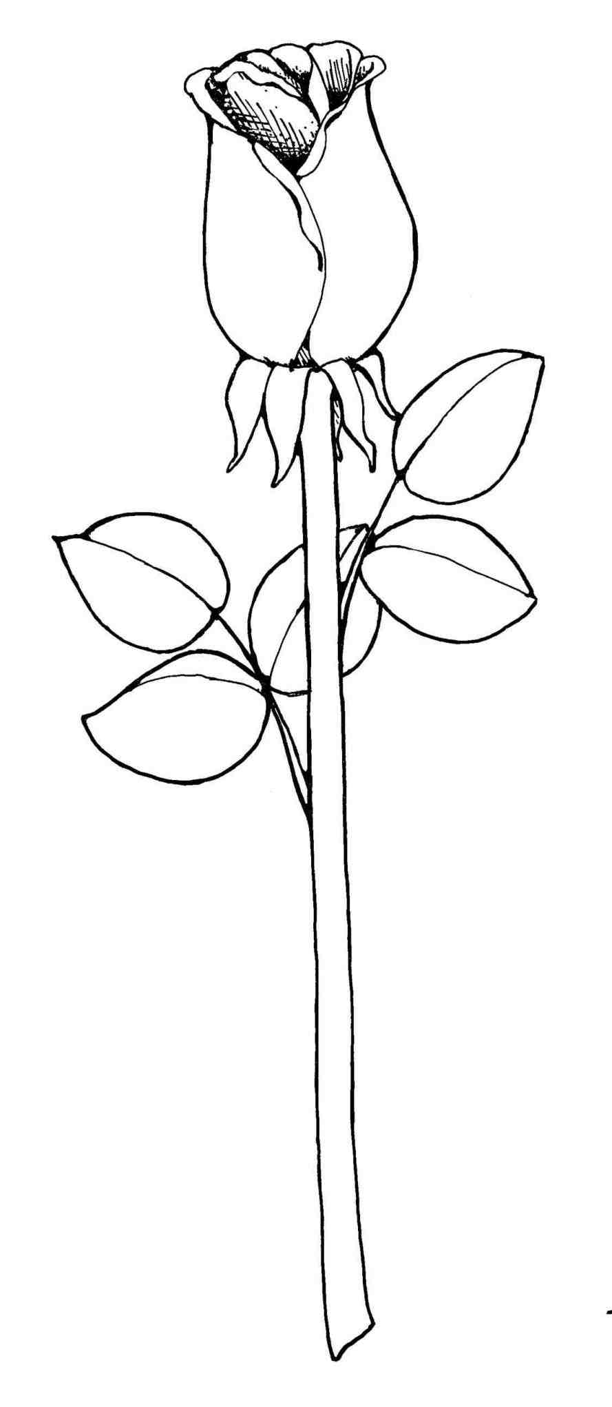 889x2042 Cute Flowers To Draw Step By Step