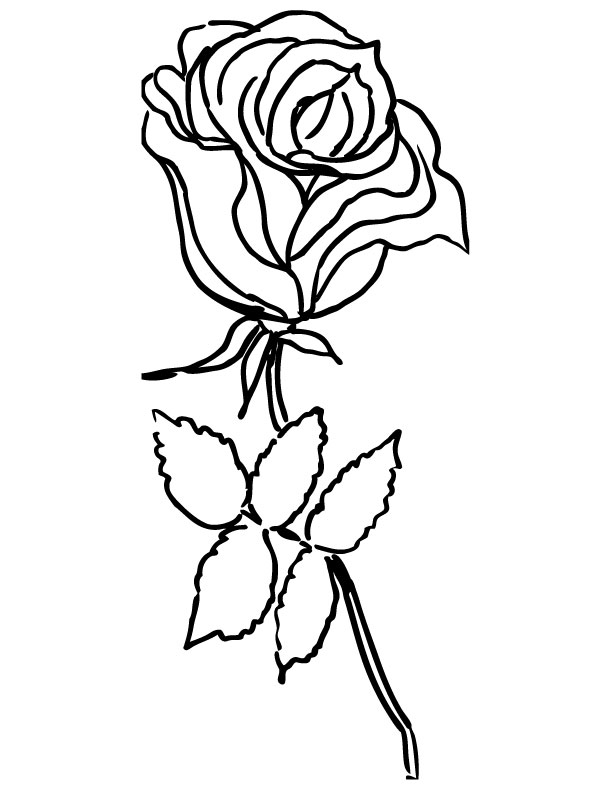612x792 Rose Coloring Page