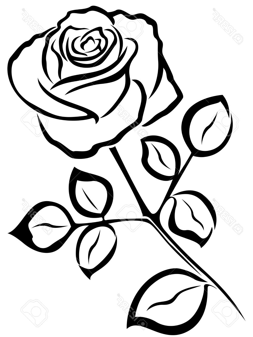 975x1300 Rose Flower Black And White Drawing Black Vector Outline Of Single