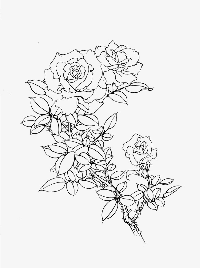 650x868 Chinese Rose, Flower Artwork, Line Drawing Png Image And Clipart