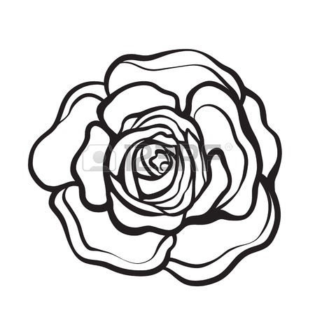 450x450 Rose Flower Isolated Outline Hand Drawn. Stock Line Vector
