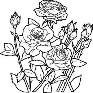 300x300 Red Rose