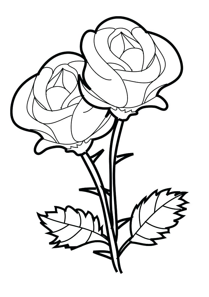 687x972 Coloring Roses To Draw Blue Rose Color Pencil Drawing How Stem