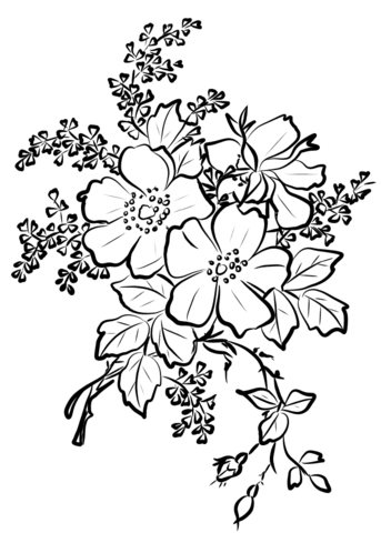 343x480 Dog Rose Flowers Coloring Page Free Printable Coloring Pages