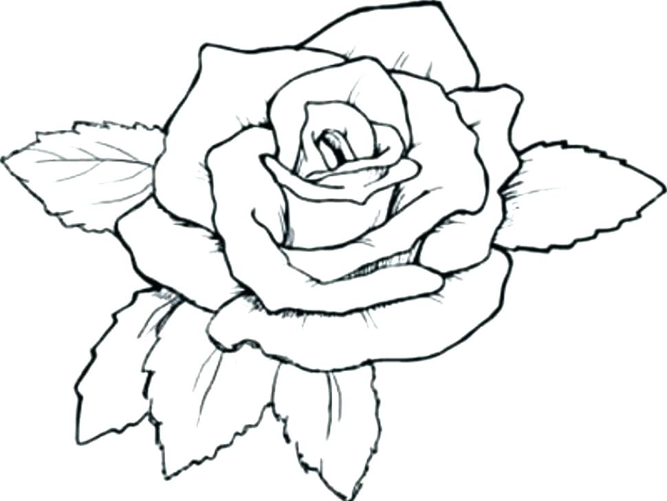 970x728 Coloring Pictures Of Roses Bluebird Coloring Page Draw Coloring