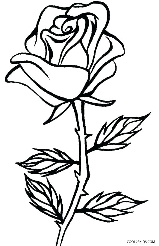 531x820 Free Printable Rose Coloring Pages Free Printable Roses Coloring