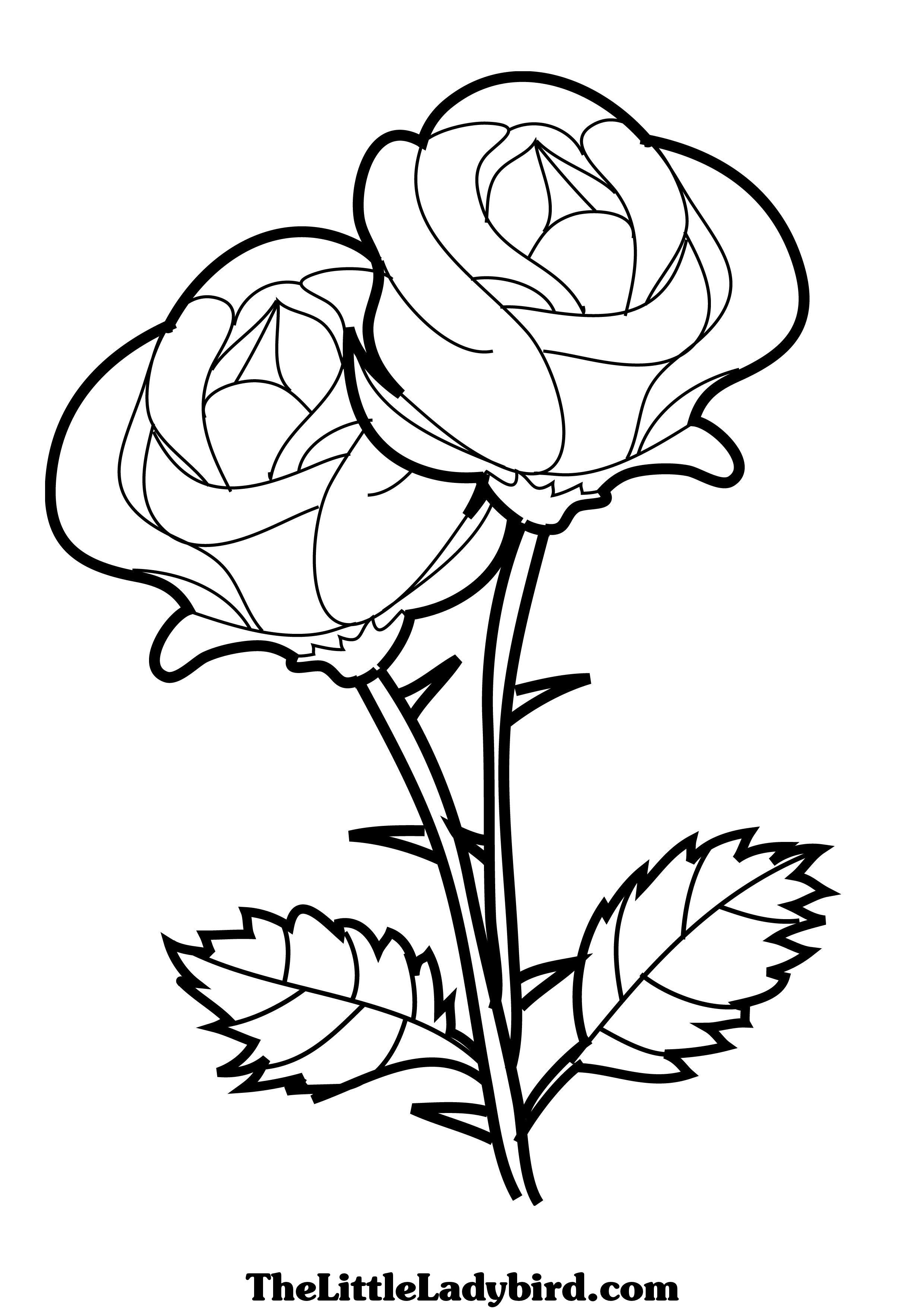 2480x3508 Three Flowers Coloring Pages For Kids Luxury Flowers Drawing Pages