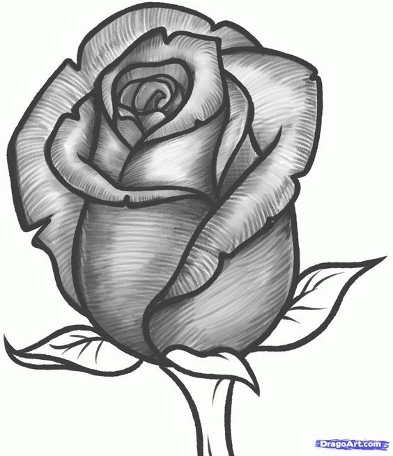 564x655 How To Draw A Rose Bud, Rose Bud Step 10 Art Rose