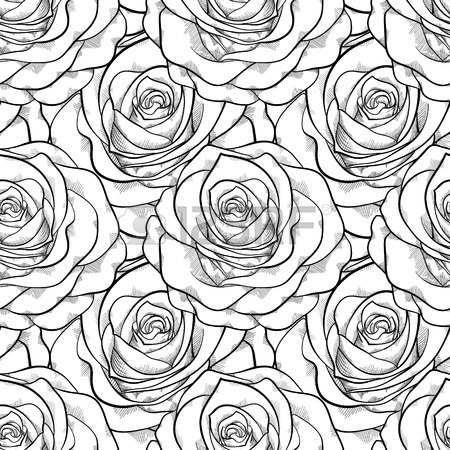 Roses Line Drawing