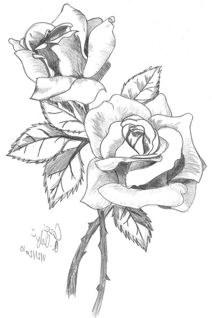 Line Drawing Sketches : Roses line drawing at getdrawings free for personal