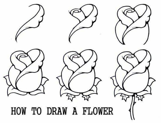 564x433 How To Draw A Rose Bud, Rose Bud, Step By Step, Flowers, Pop