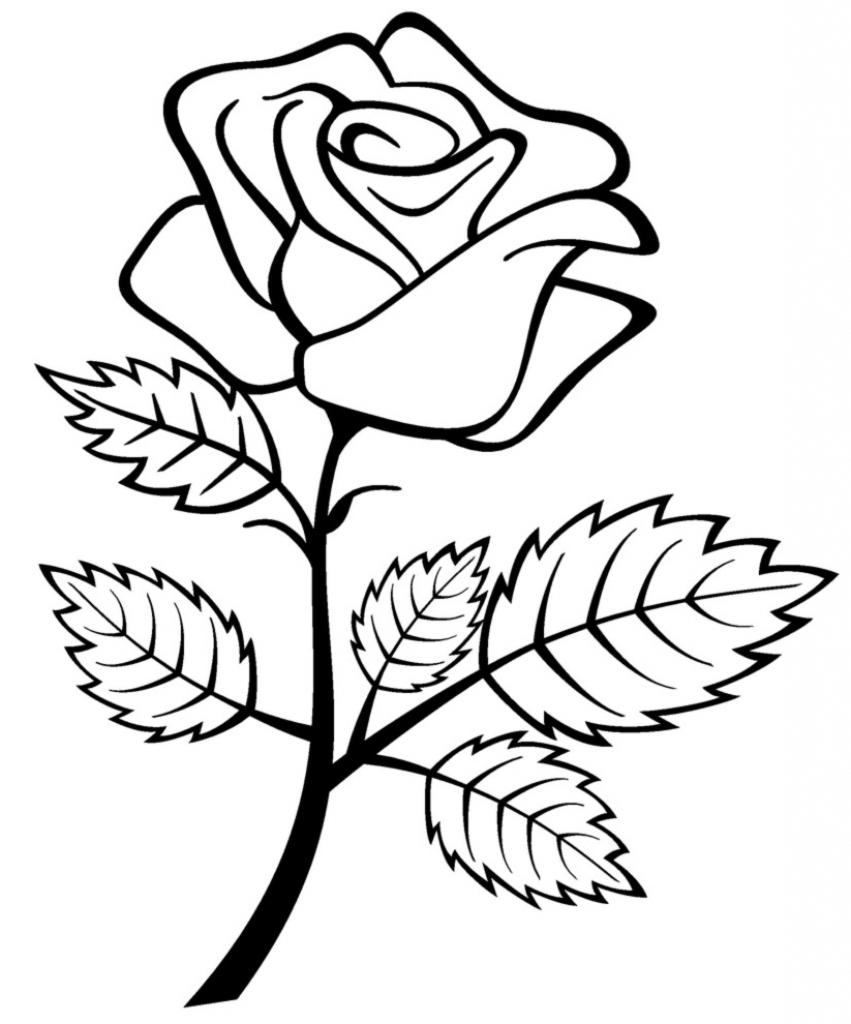 rose drawing template - Yolar.cinetonic.co