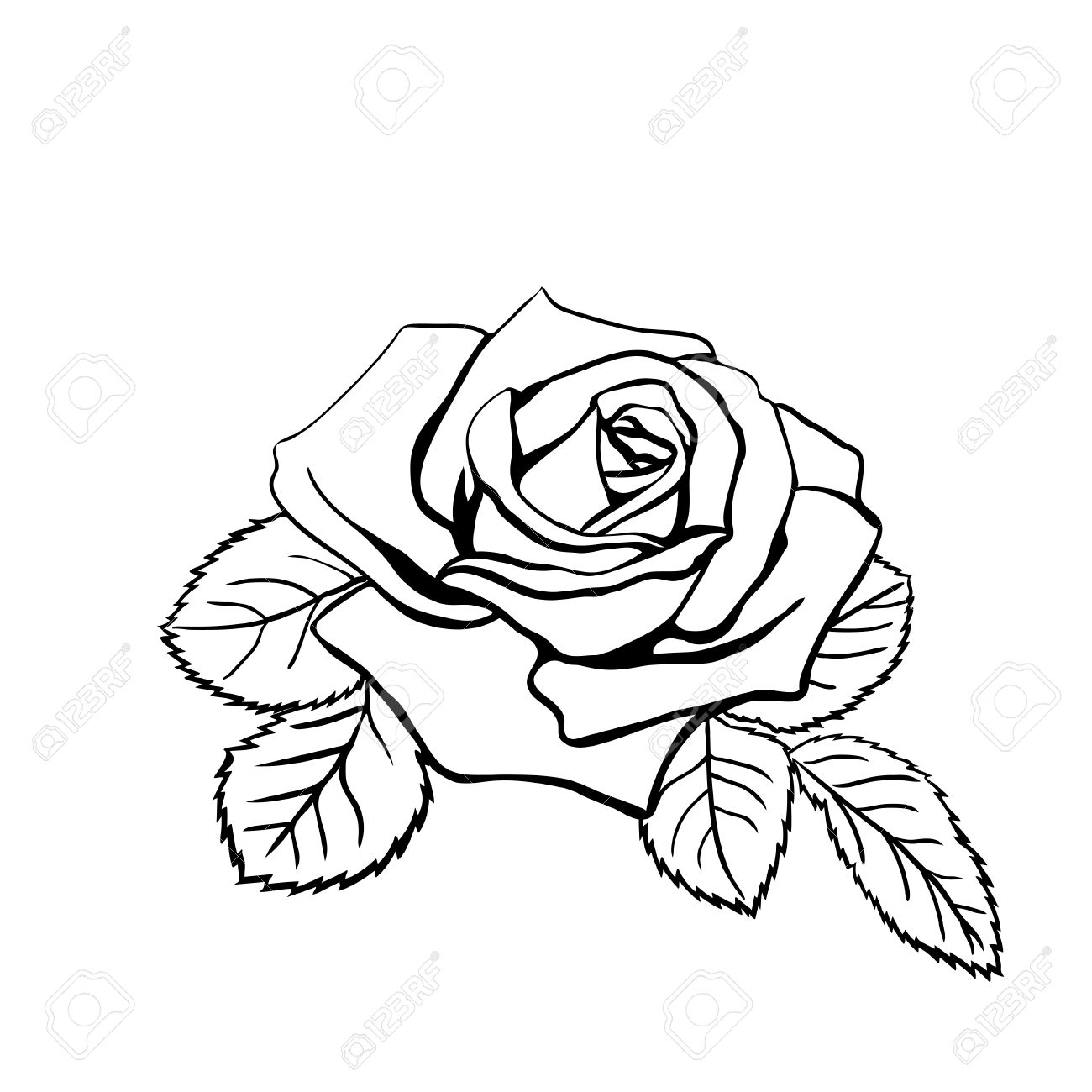 1300x1300 Head And Roses Tattoo Stock Photos. Royalty Free Business Images