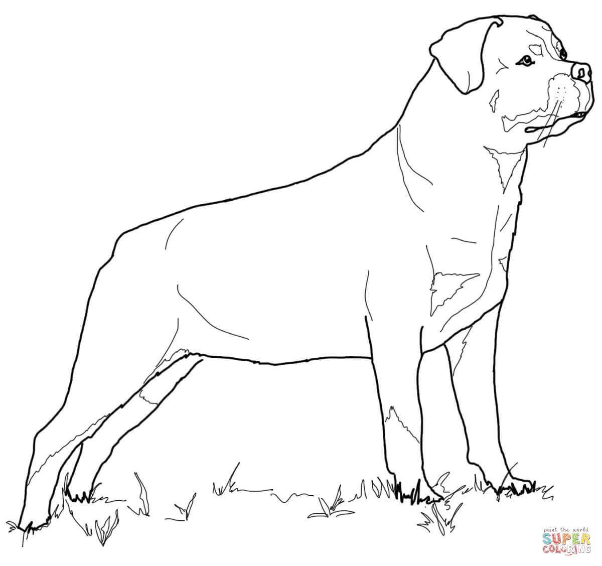 Awesome 1200x1128 Rottweiler Animal Coloring Pages Colorful Pictures Of Rotties How
