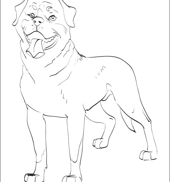 560x600 Rottweiler Animal Coloring Pages Rottweiler Animal Coloring Pages