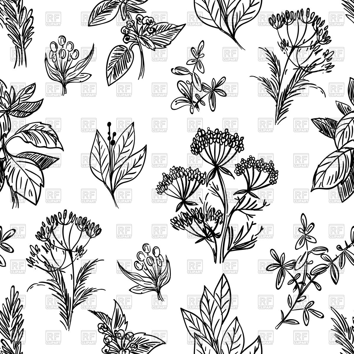 1200x1200 Sketch Herbs And Flowers Hand Drawn Seamless Pattern Royalty Free