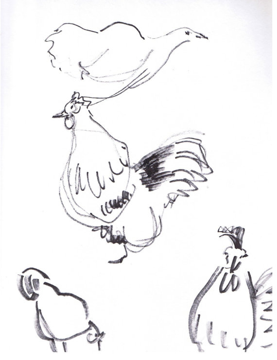 570x741 Chicken And Rooster Sketches, Original Gesture Drawings In Ink
