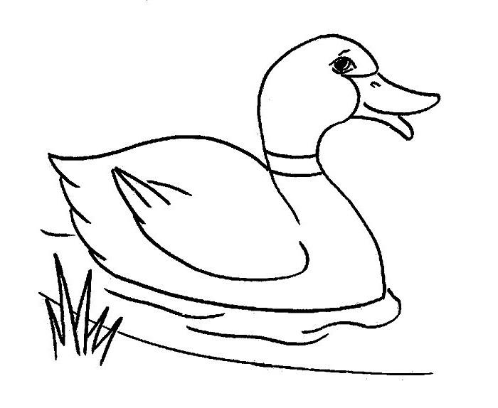 700x574 Duck Template