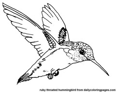 480x384 Texas Ruby Throated Hummingbird Bird Coloring Pages Birds