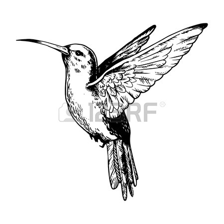 Ruby Throated Hummingbird Drawing