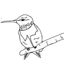 220x217 Hummingbirds For Kids. Fun Facts And Activities