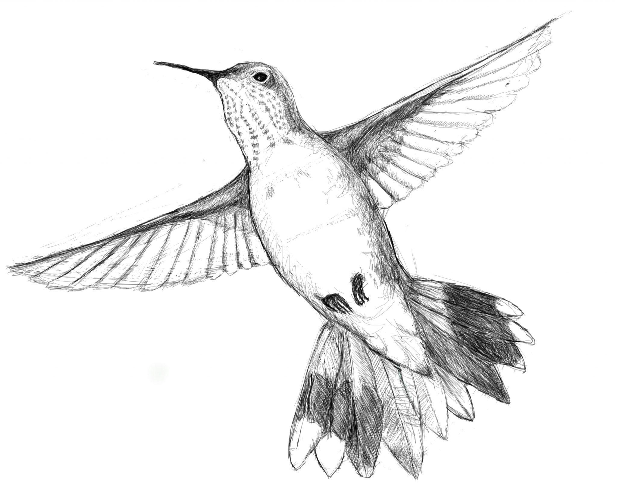 2048x1638 Rufous Hummingbird 10,000 Bad Drawings