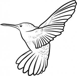 302x297 How To Draw A Ruby Throated Hummingbird Step 7 Art Lll