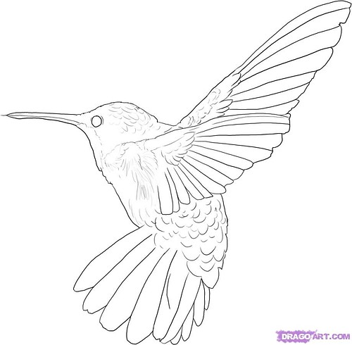 500x490 Kids Coloring Pages Humming Birds