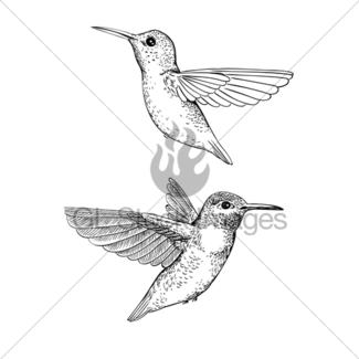 325x325 Hand Drawn Hummingbird Gl Stock Images