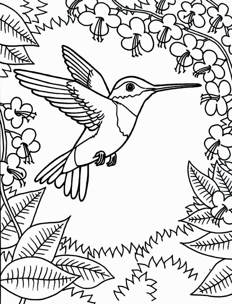 810x1063 Humming Bird Coloring Pages Colouring Colouring