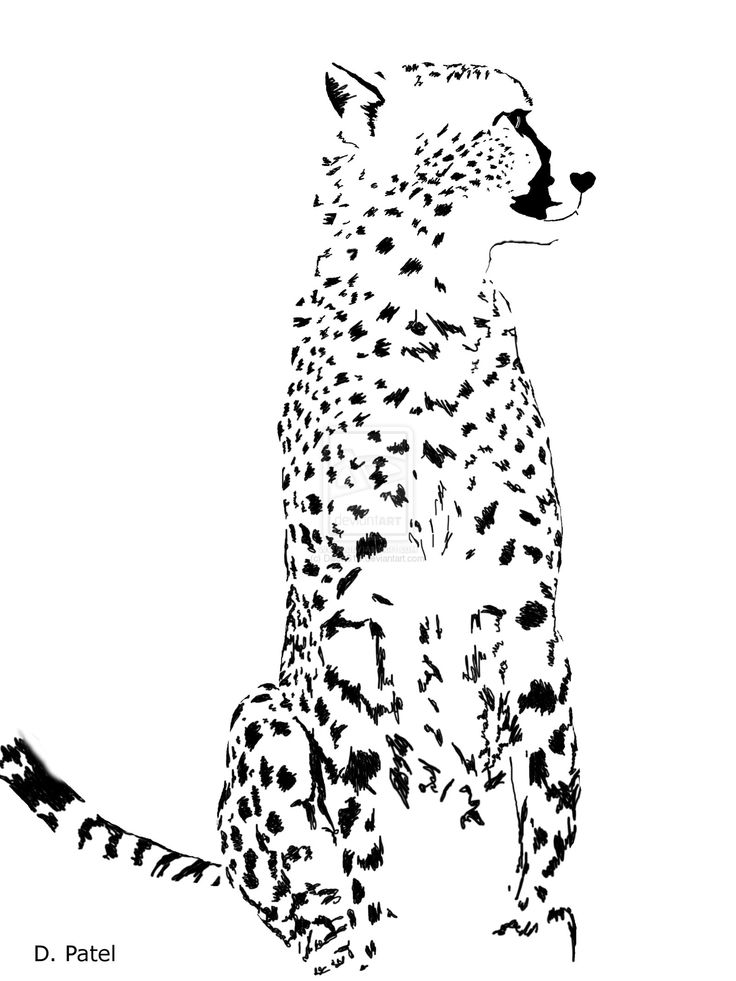 Running Cheetah Drawing